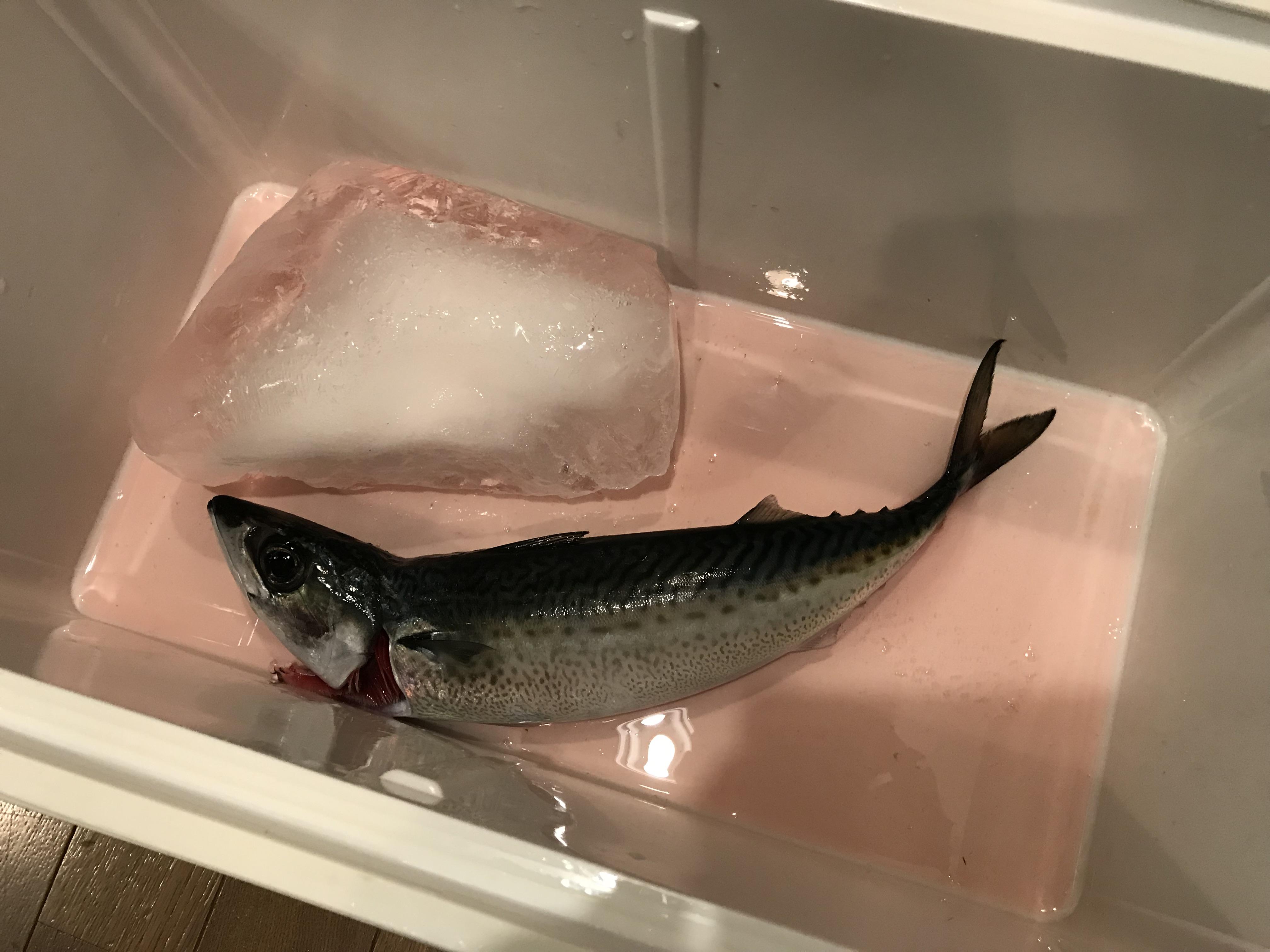ラングイの寒サバ釣り
