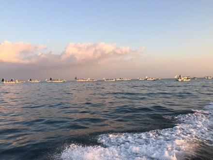 大阪湾タチウオ