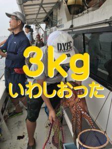 明石のタコ釣り3キロ