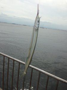 南芦屋浜でサヨリ釣り