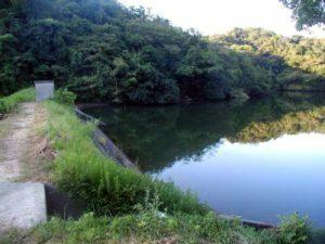 淡路の野池