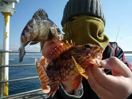淡路島翼港の釣り